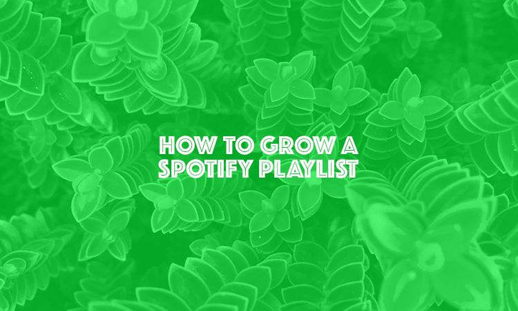 3 Ways To Get More Followers for your Spotfy Playlist